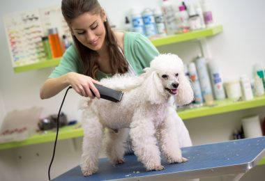 Training Period For Dog Groomer