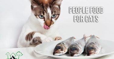 People Food For Cats