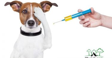 Pet Diabetes Signs And Treatment Pups To Pet