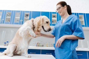Vet Assistant Career