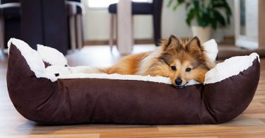 Dog Bed Guide FI