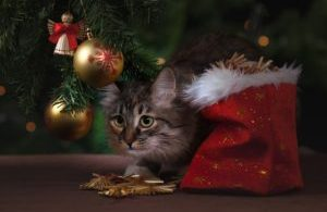 3 Ways to Give Pets as Gifts