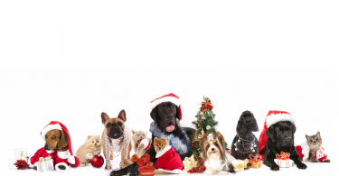 Pet holiday gifts