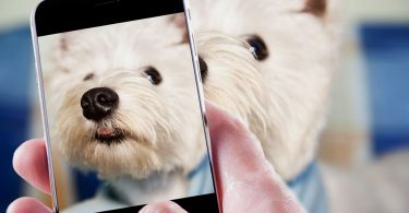 take photos of your dog with 4 tips