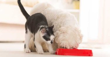stop dog eating cat food