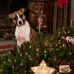 dog safe holiday decorating