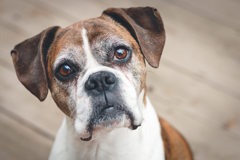 Skin Cancer In Dogs Pets Training And Boarding